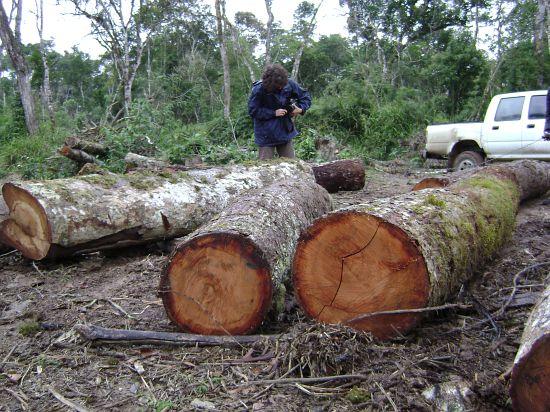 Apagão Ambiental: seria cômico, não fosse trágico