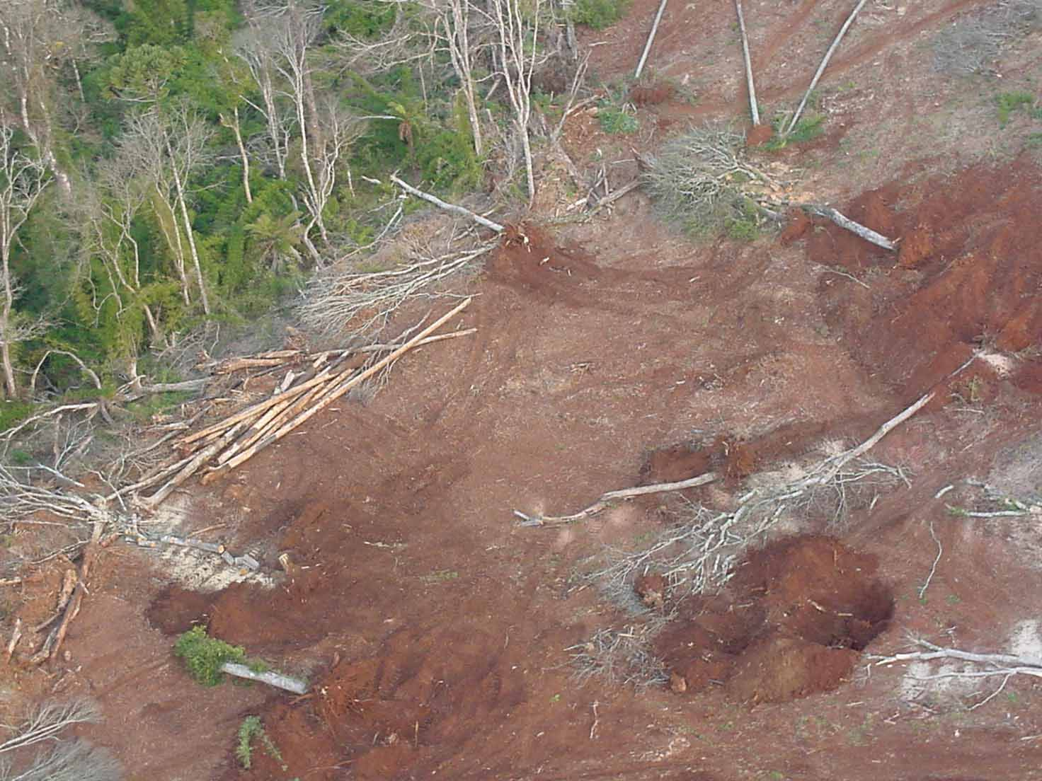 Código Florestal em perigo iminente