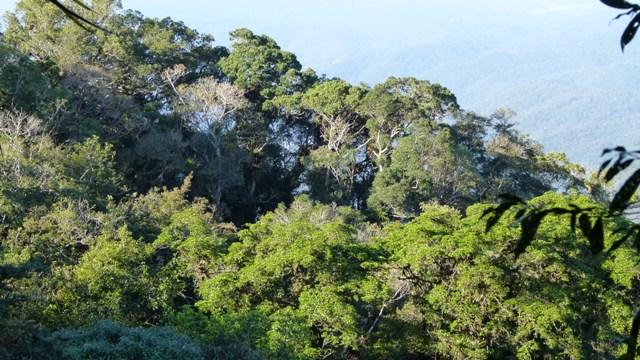 É Natal… tempo de plantar florestas!