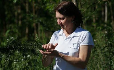 Plantadores de Florestas – a guardiã do verde nas pequenas propriedades catarinenses