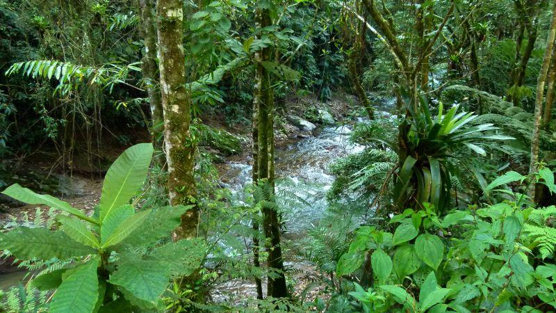 Código Florestal: bom senso manda adiar a votação
