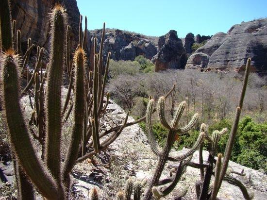 28 de abril é Dia Nacional da Caatinga