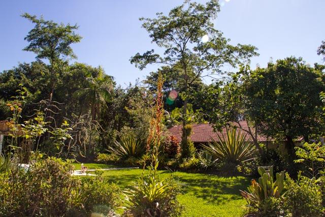 Sobre jardins e borboletas